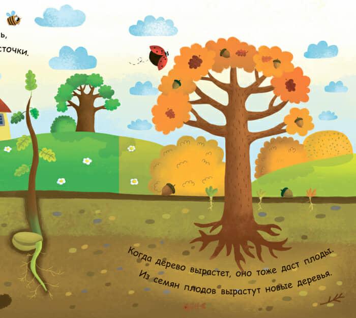 Книга Как вырастает дерево Ранок разворот 4