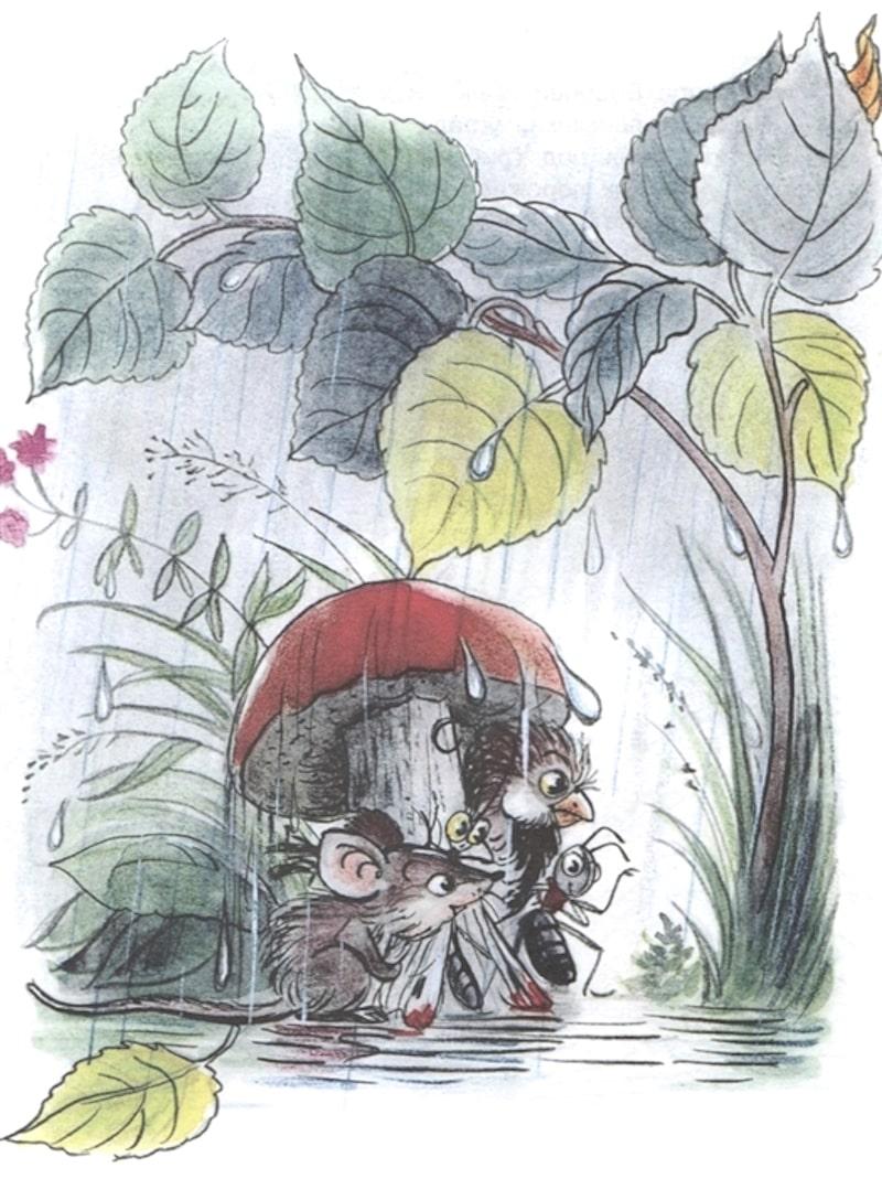 Книга Под Грибом Владимир Сутеев иллюстрации 1