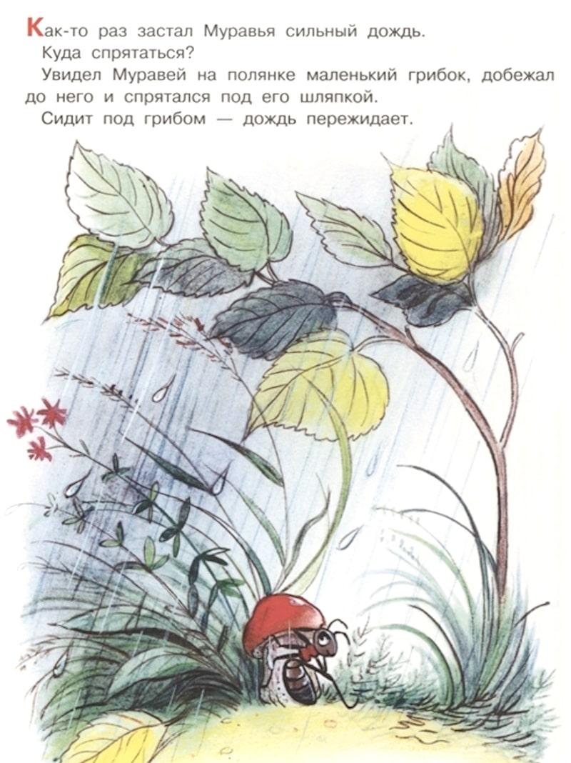 Книга Под Грибом Владимир Сутеев иллюстрации 2